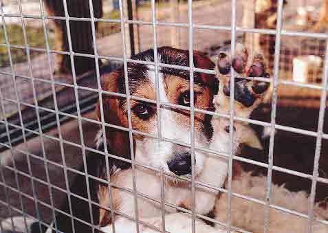 Refuge SPA de Gennevilliers : chronique de la souffrance animale et de la haine ordinaire